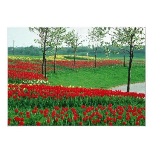White Tulips, Cambridge Park flowers Invite