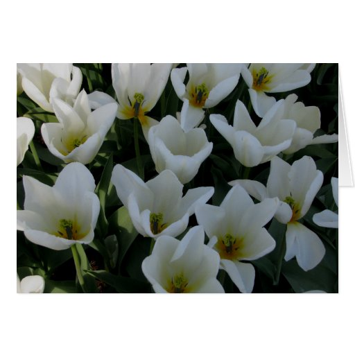 White Tulips Card