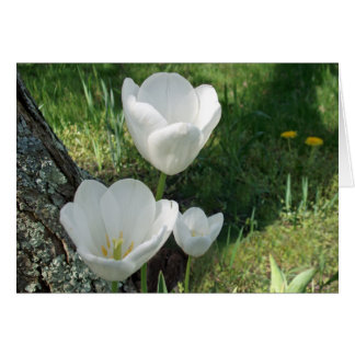 White Tulips Flower Trio Greeting Card