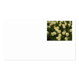 White Tulips in the Boston Gardens Business Card