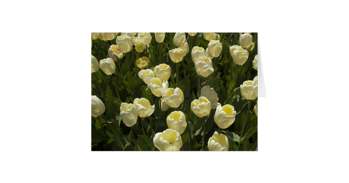 Field Of Tulips Gifts on Zazzle