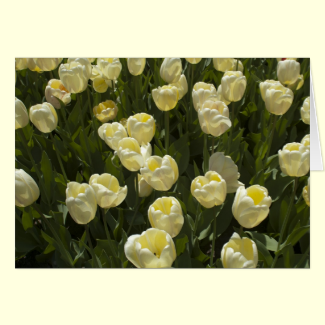 White Tulips in the Boston Gardens Greeting Card