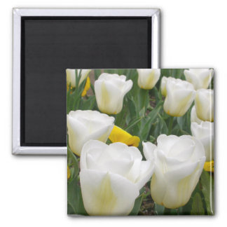White Tulips 2 Inch Square Magnet
