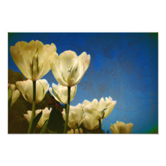 White Tulips Photo with Floral Swirl Pattern