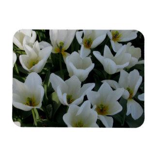 White Tulips Rectangular Photo Magnet