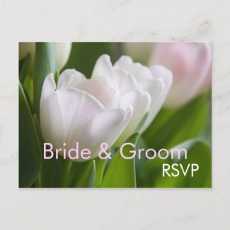 White Tulips • RSVP Postcard postcard
