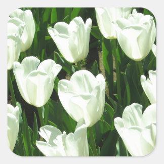 White Tulips Sticker