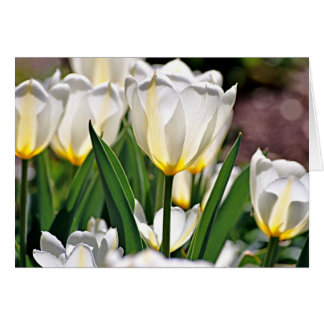 White Tulips with Yellow Feathers Greeting Card