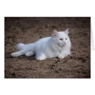White turkish angora cat on brown background greeting card