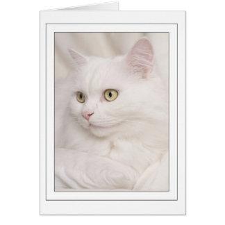 White Turkish angora tomcat Greeting Card