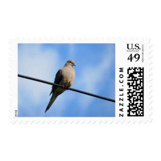 White Turtle Dove Bird Postage