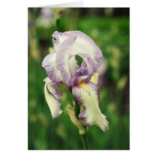 White & Violet Bearded Iris Card