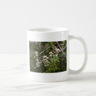 white Virginia Saxifrage (Saxifraga Virginiensis) Mugs