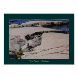 White Wagtail 01 Posters