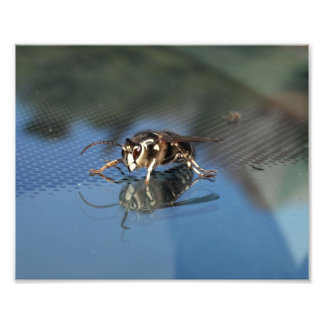 White Wasp Art Photo