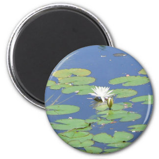 White Water Lilies 2 Inch Round Magnet