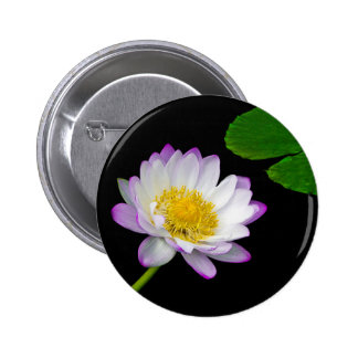 White Water Lily Pins