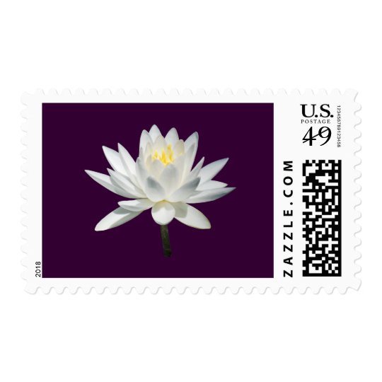 White Water Lily in Sunshine Postage