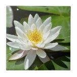 White Water Lily Lotus Ceramic Tiles