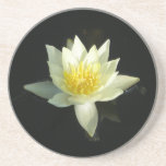 White Water Lily/Lotus Coasters