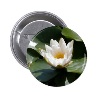 White Water Lily Lotus Flower Pinback Button