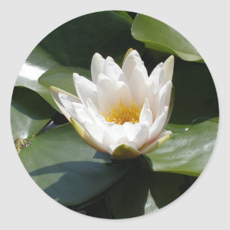 White Water Lily Lotus Flower Round Stickers