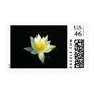 White Water Lily/Lotus Postage Stamps