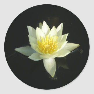 White Water Lily Lotus Stickers
