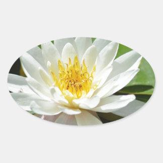 White Water Lily Lotus Sticker