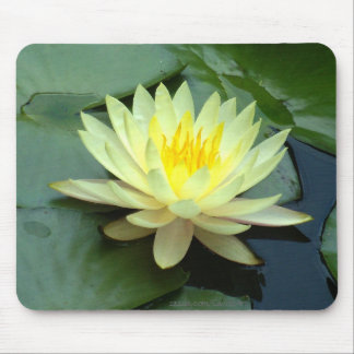 White Water Lily Mousepads