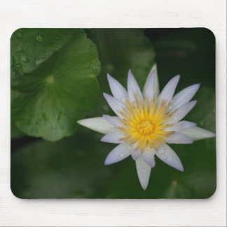 White Water Lily Mouse Pad