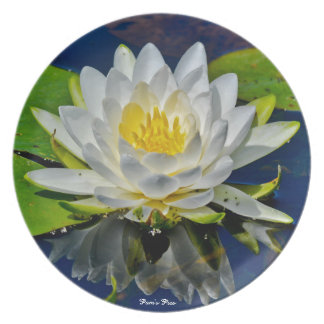 White Water Lily Plate