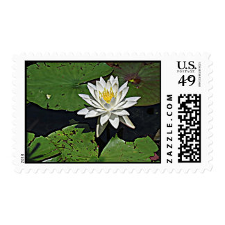 White Water Lily Postage Stamps
