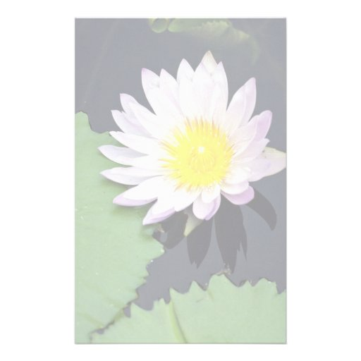 White water lily stationery
