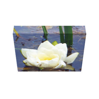 White Water Rose Canvas Print