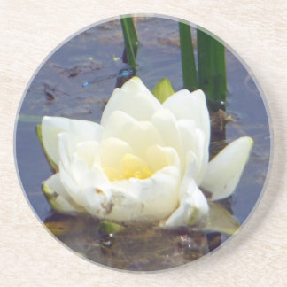 White Water Rose Sandstone Coaster
