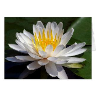 White Waterlily Blank Greeting Card