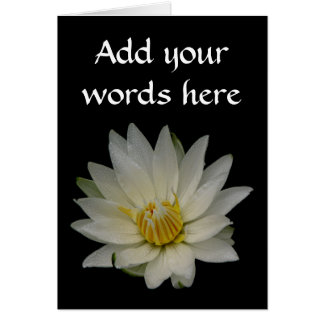 White Waterlily Card