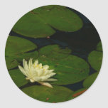 White Waterlily I Peaceful Floral Photography Classic Round Sticker