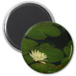 White Waterlily I Peaceful Floral Photography Magnet