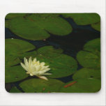 White Waterlily I Peaceful Floral Photography Mouse Pad