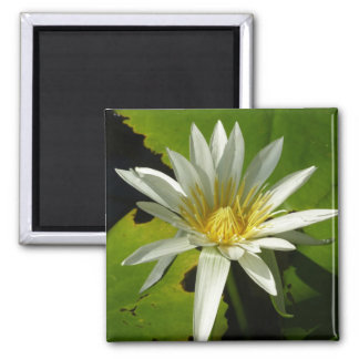 White Waterlily II 2 Inch Square Magnet