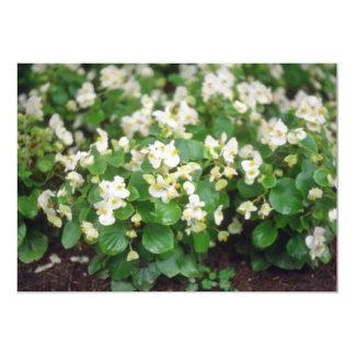 "white Wax Begonia (Begonia) flowers 5"" X 7"" Invitation Card"