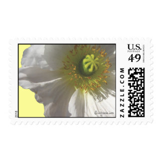 White Wedding Flowers Postage Stamps Postage