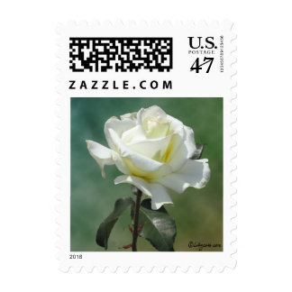 White Wedding Flowers Small Postage Stamps