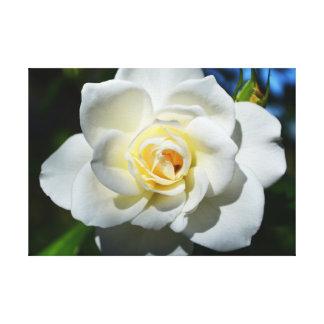 White Wedding Rose Canvas Print