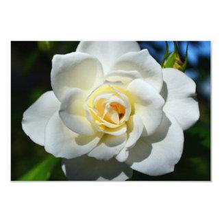 White Wedding Rose Invitations