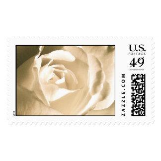 White Wedding Rose Postage Stamp