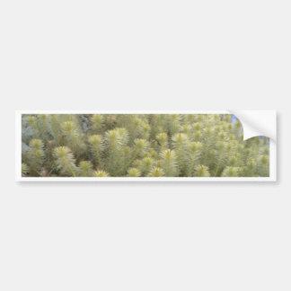 White weeds bumper sticker