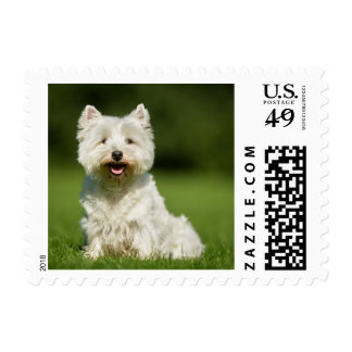 White West Highland Terrier Puppy Dog - Westie Postage